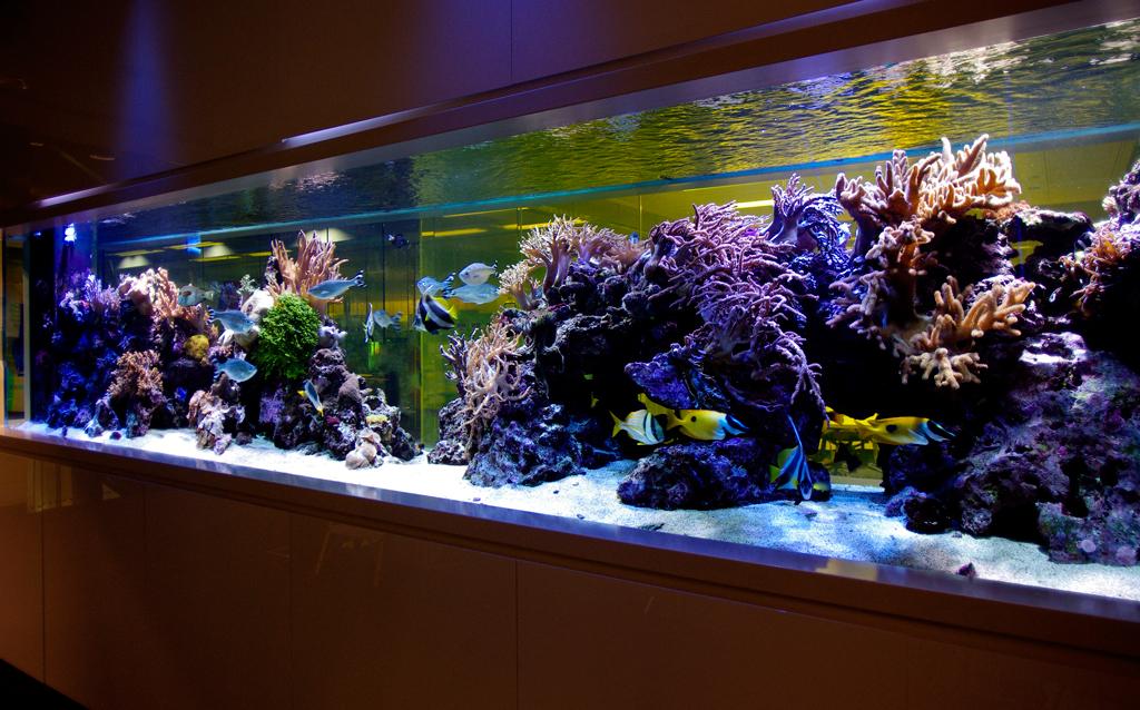 Оборудование для аквариумов и товары для животных
